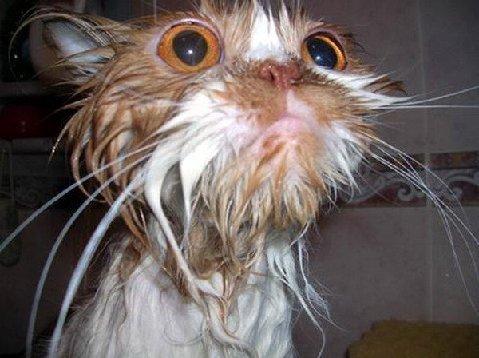 wet-cat